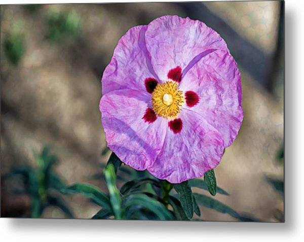 Metal Print featuring the photograph Purple Rockrose by Alison Frank