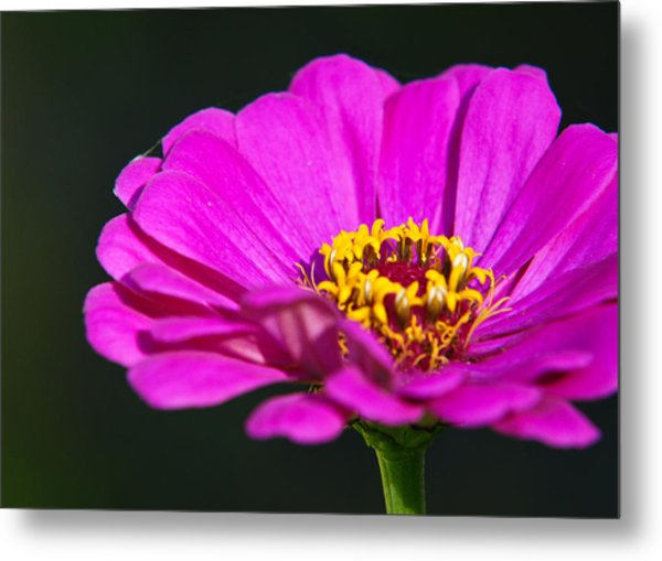 Purple Flower Close Up Metal Print by Edward Myers