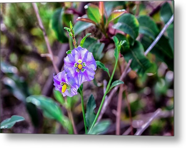 Metal Print featuring the photograph Purple Flower Family by Alison Frank