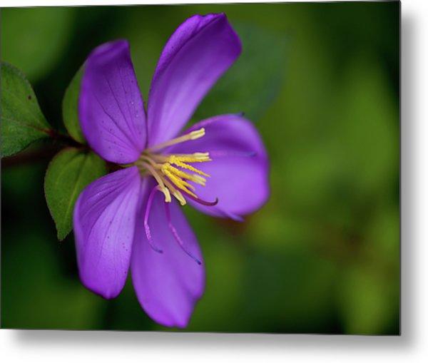 Purple Flower Macro Metal Print