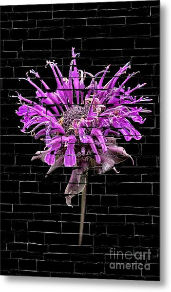 Purple Flower Under Bricks Metal Print