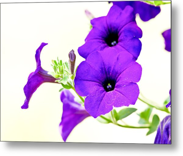 Purple Flowers On Light Background Metal Print by Edward Myers
