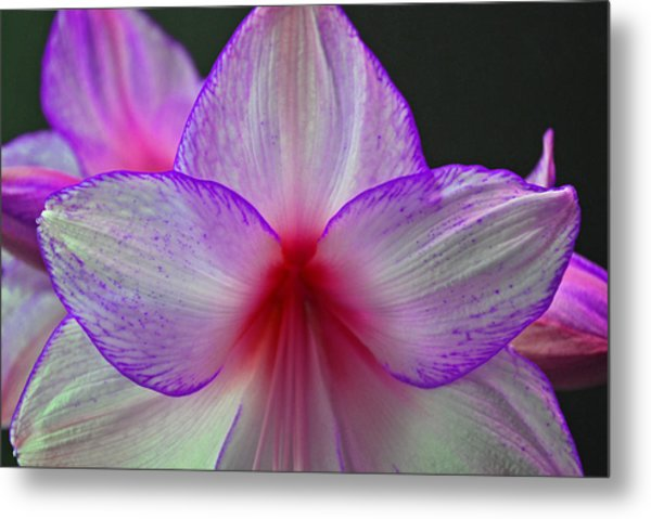 Purple Haze Metal Print