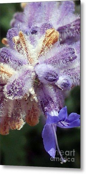 Purple Iced Blue New Mexico Wildflower Metal Print
