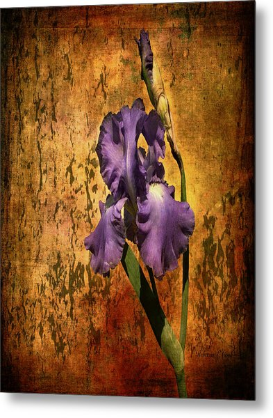 Purple Iris At Sunset Metal Print