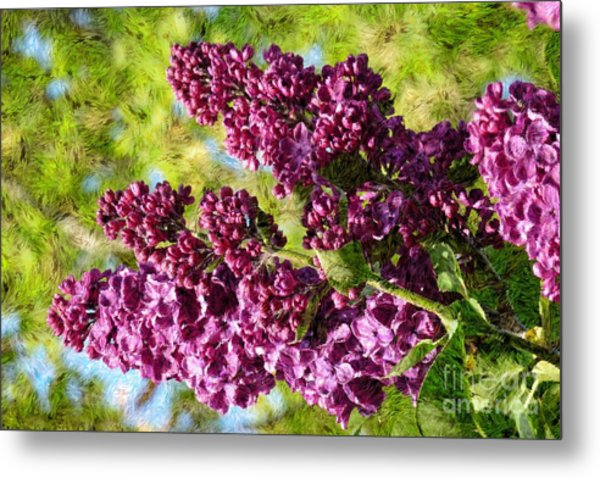 Purple Lilac 1 Metal Print