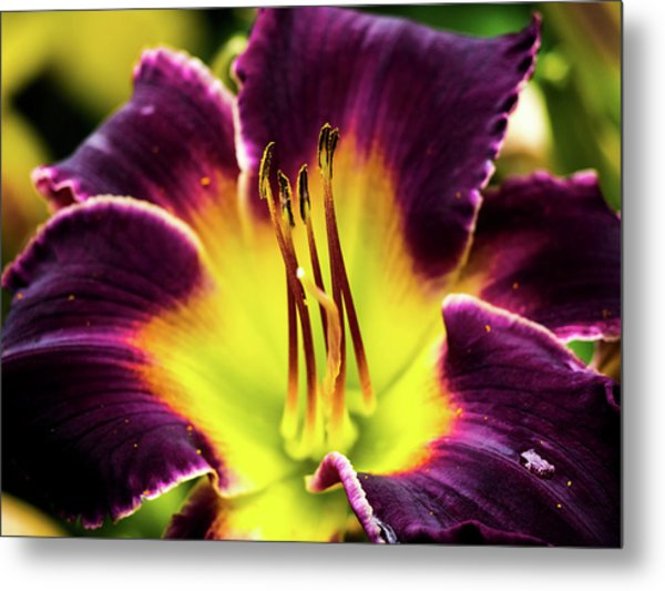 Metal Print featuring the photograph Purple Lily - Close Up by Penny Lisowski