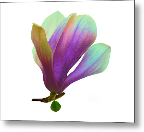 Purple Magnolia Metal Print