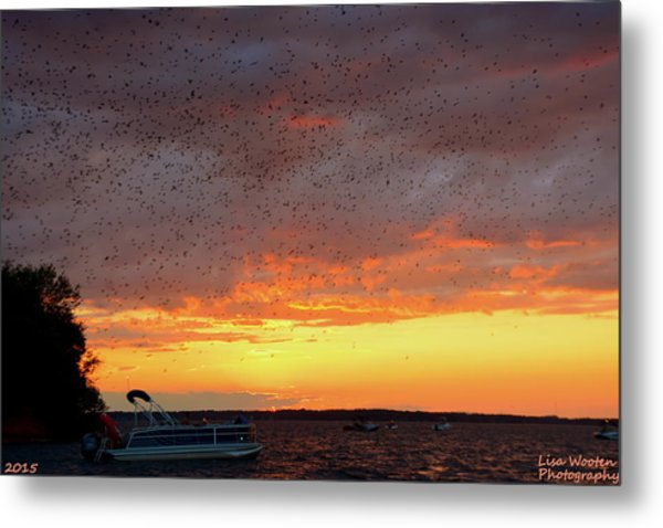 Purple Martin Sunset On Lake Murray Sc Metal Print