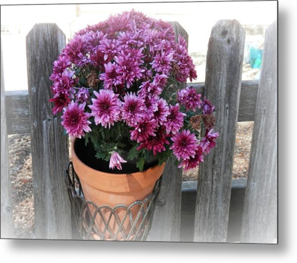 Purple On The Fence Metal Print
