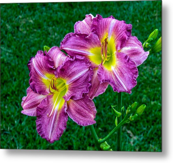 Purple Pair Metal Print