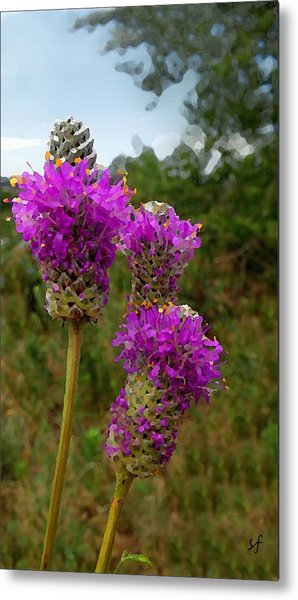 Purple Prairie Clover Metal Print