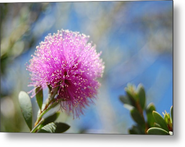 Purple Puff Metal Print by Jean Booth