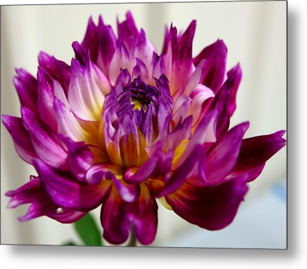 Metal Print featuring the photograph Purple Sunset Flower 1 by Marianne Dow