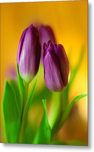 Purple Tulips Metal Print by Ahmed Hashim