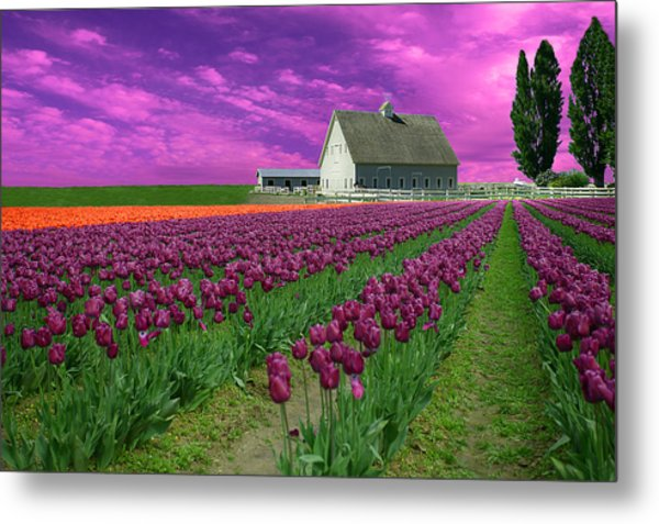 Purple Tulips With Pink Sky Metal Print
