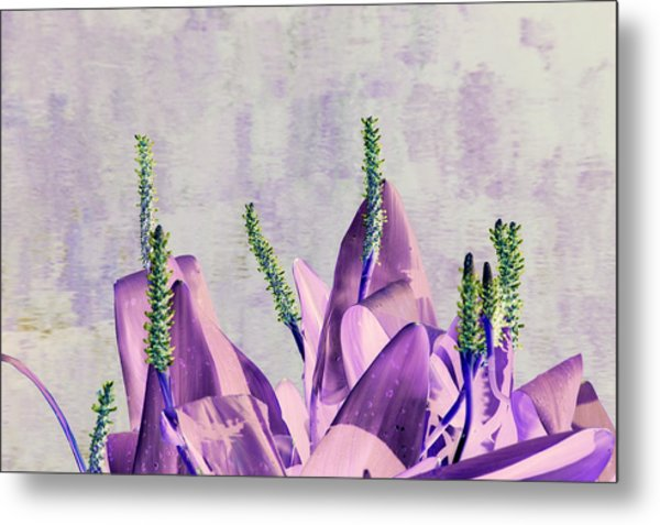 Purple Water Plant Metal Print