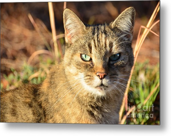 Purr-fect Kitty Cat Friend Metal Print