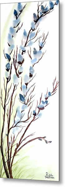 Pussy Willows In Spring Metal Print