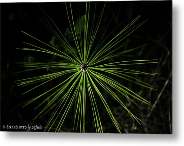 Pyrotechnics Or Pine Needles Metal Print