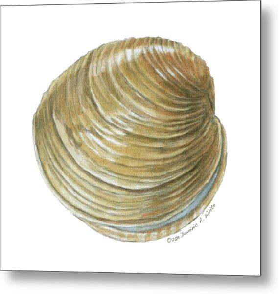 Quahog Shell Metal Print