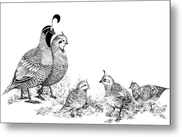 Quail Family Outing Metal Print