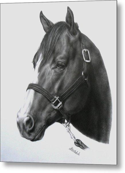 Quarter Horse Portrait Metal Print
