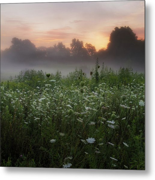 Queen Ann Sunrise Square Metal Print