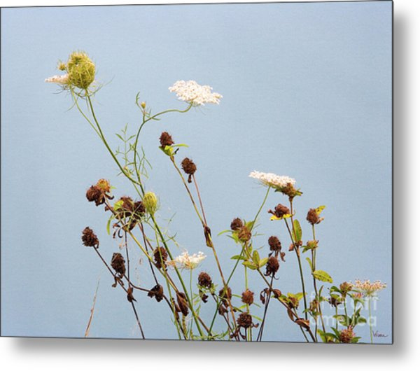 Queen Anne's Lace And Dried Clovers Metal Print