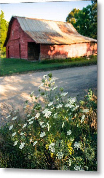 Queen Anne's Lace By The Barn Metal Print