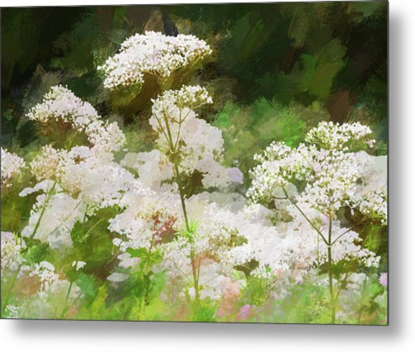 Metal Print featuring the photograph Queen Annes Lace. by Rob Huntley