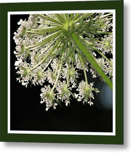 Queen Anne's Umbrella Metal Print by Ginger Howland
