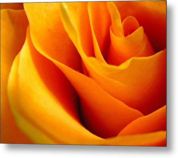 Queen Rose Metal Print