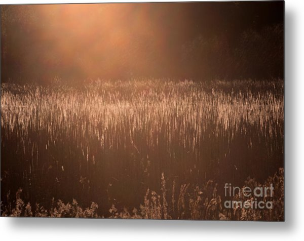 Quiet Evening Light Metal Print