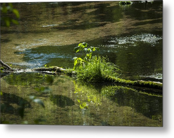 Quiet Trout Stream Metal Print