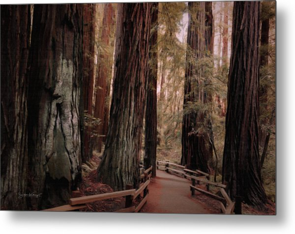Quiet Walk Metal Print