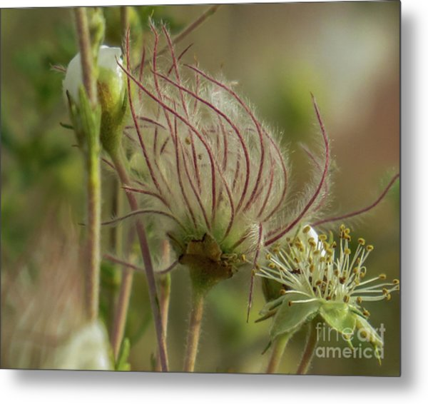Quirky Red Squiggly Flower 2 Metal Print