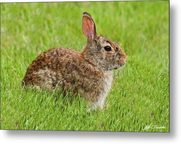 Rabbit In A Grassy Meadow Metal Print