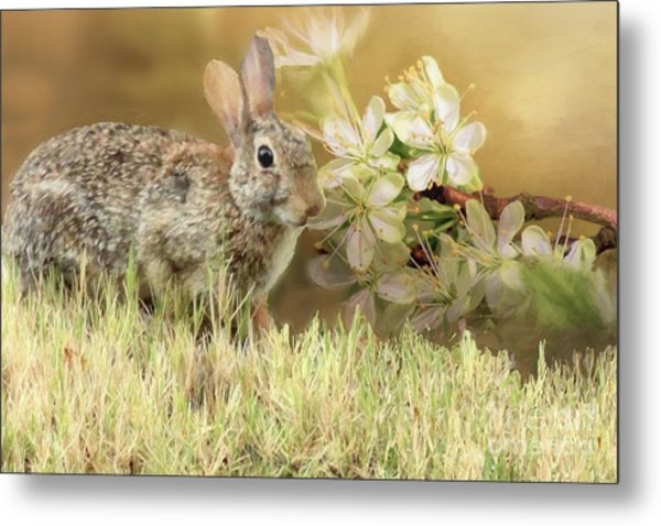 Eastern Cottontail Rabbit In Grass Metal Print