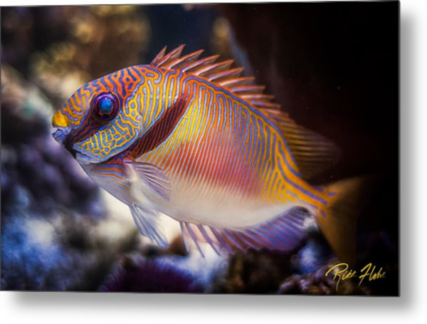 Rabbitfish Metal Print