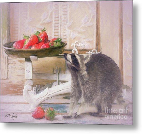 Raccoon And Strawberries Metal Print by Tim Wemple