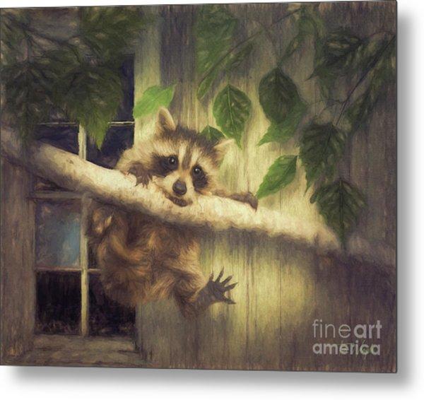 Raccoon Hangin' Around Metal Print by Tim Wemple