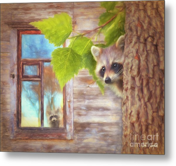 Raccoon Lookout Metal Print by Tim Wemple