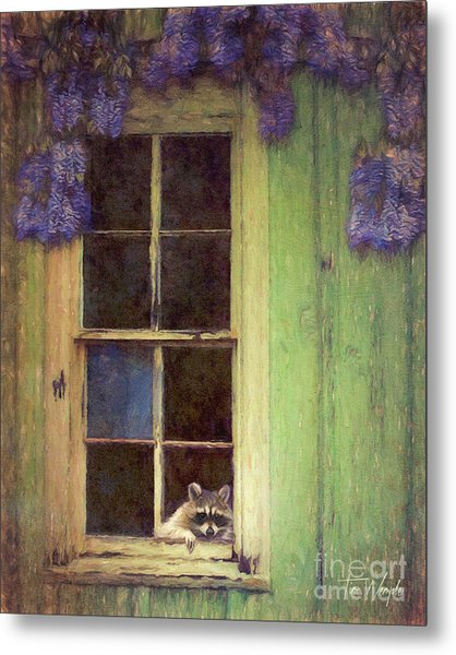 Raccoon Window Metal Print