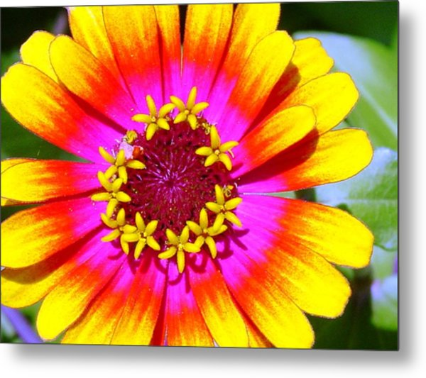 Radial Radiance Metal Print by Ward Smith