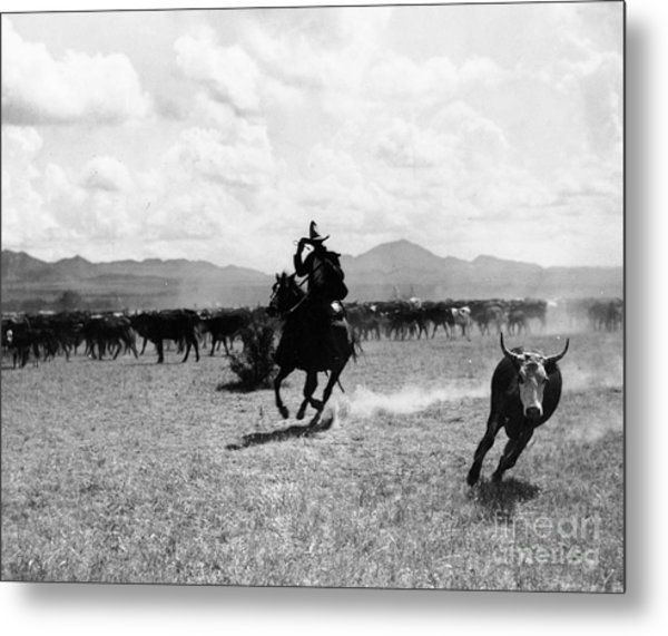 Raguero Cutting Out A Cow From The Herd Metal Print