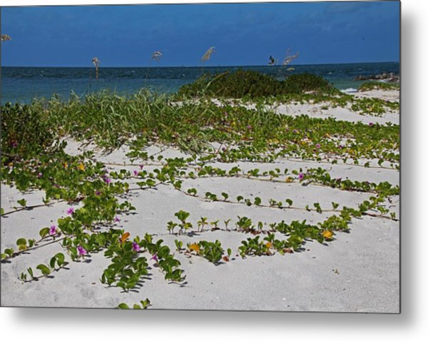 Railroad Vines On Boca IIi Metal Print