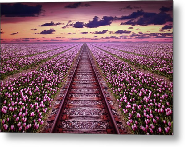 Railway In A Purple Tulip Field Metal Print