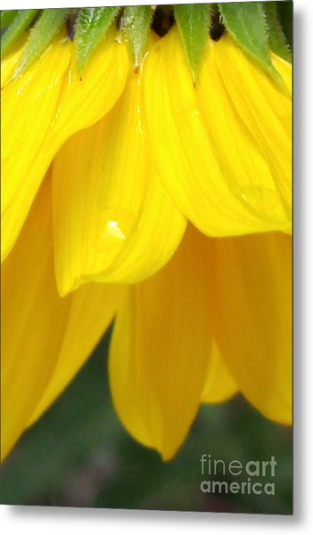 Rain And Sunshine On A Colorado Wildflower Metal Print