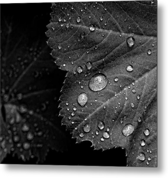 Rain Drops On Leaf Metal Print by Robert Ullmann